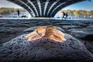 Under the Wison Bridge