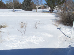 My main front flowerbed, sleeping under the snow (tigerbeatlefreak) Tags: flowerbed winter snow nebraska