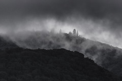 Untitled (SlocumPhotography) Tags: rain forest landscape cloud dark nature canon almadenquicksilvercountypark storm