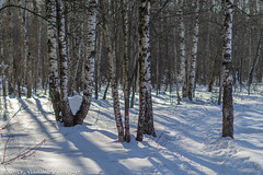 2018-03-19-08-45-37-7D2_4015 (tsup_tuck) Tags: 2018 march moscow spring woods
