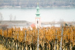 Danube (Nuuttipukki) Tags: vienna kahlenberg vineyards winter offseason weinberg wien austria travel church donau danube wanderlust nature