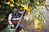 Cultivation of lemons in Tajikistan (UNDPineuropeandcis) Tags: tajikistan agriculture environment farming lemon villager outdoor food khatlonprovince