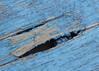 Weather Damaged (Helen Orozco) Tags: macro macromondays imperfection peelingpaint weatheredwood chair blue split texture