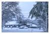 Blizzard ! (Timothy Valentine) Tags: 0318 blizzard storm snow tree intheneighborhood house 2018 damage downed eastbridgewater massachusetts unitedstates us