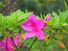 F2246265 (unitcell) Tags: 台灣 桃園 復興 桃源仙谷 taiwan flower