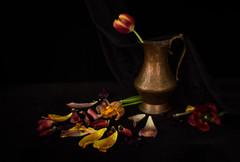 Still Life with Tulip Petals (suzanne~) Tags: copperpitcher dark oldtulip stilllife tabletop wabisabi tempipassati lensbaby softfocusoptic