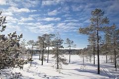 Soljanen (Markus Heinonen Photography) Tags: seitseminen seitsemisen kansallispuisto nationalpark national park suo mire mosse soljaset soljanen suomi finland luonto nature maisema landscape pirkanmaa