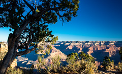 Grand Canyon-22 (amylippman1) Tags: 2016 canyon grandcanyon southrim southwest