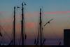 Douceur matinale (mathieuo1) Tags: ilederé laflotte port sunrise morning sun sunbathing sundown color red burn shape shadow mood bird dark play blue soft blur blurry island fr france free fly summer boat boarders sea ocean horizon view perspective composition rules photography work explore dlsr discover softness landscape scape seascape season light illumination killer clouds dawn europe day bluehour mathieuo
