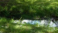 Seasonal Stream (Room With A View) Tags: www green water stream