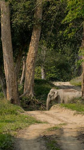 Slow down. Elephant Ahead.