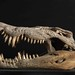 Saltwater Crocodile - Wikipedia