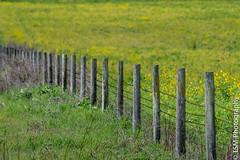 _IMG3695 (blackcloudbrew) Tags: da300 dicmar18 sonoma ground yellowgreen petaluma california unitedstates us
