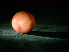 egg (grahamrobb888) Tags: nikon nikond800 nikkor d800 afnikkor80200mm128ed light flash sb700 speedlight egg green shadow spotlight