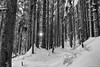 The Early Morning Light (Mark Griffith) Tags: 50k issaquah issaquahalps run running sonyrx100v tigermountain tigermountaintrail trailrunning washington 20180303dsc05101edit