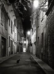 Ogni vicolo ha i suoi gatti (Aellevì) Tags: vitanotturna notte