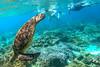 Apo island coral and sea turtle trip-1-17 (walterkolkma) Tags: apoisland philippines negrosoriental seaturtle snorkeling coral reef sun sea visayas siquijor turtle gopro