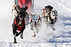 Sled dog race (My Planet Experience) Tags: deutschkurzhaar braqueallemand greyster alaskan team dog animal nordic sled snow speed race racing running musher mushing pulka pulk sledge sleigh white winter alaska yukon siberia myplanetexperience wwwmyplanetexperiencecom