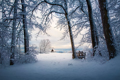OUT OF DARKNESS (pidalaphoto) Tags: rhinebackny trees scenichudson storm poetswalkpark fields winter white snow hudsonvalley