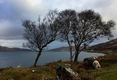 IMG_7368 (Sula Riedlinger) Tags: isleofmull mull scotland scottishlandscape landscape uklandscape britishlandscapes coast coastline ukcoastline sea seascape weather clouds cloud winter winterlandscape scenicroad scenicroute