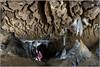 Cueva de Mairulegorreta (JL.González) Tags: caves cuevas fotografia subterránea ilunpeart