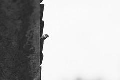 Pájaros fuera de mi ventana. (Gerardo Nava Fotografía) Tags: sony sonyflickraward sonyalpha sonyméxico sonya77ii sonyalphamexico sal135f18z sonnart18135za sonnart18135 sonyzeiss zeiss zeisslens portrait retrato animales birds pajaro méxico