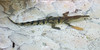 day twelve at the croco-cun zoo (dolanh) Tags: mexico zoo crococun crocodilefarm yucatan crocodile