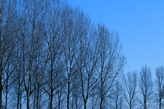 IMG_012350 - Blue sky (Monique van Gompel) Tags: prettyinblue bluesky trees sky nature natuur 7dwf natuurfotografie naturephotography outdoor tamronsp90mmf28dimacro11vcusd canoneos80d