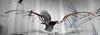 learning to fly (rafasmm) Tags: learning fly leonardo da vinci model exhibition lodz łódź poland polska europe ec1 construction glider nikon d90 sigma 1020 ex