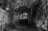 Mary Well Path (Tom McPherson) Tags: stairs trees bushes path road mono blackwhite steps
