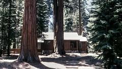 Sequoia N.F. (Raúl Alejandro Rodríguez) Tags: sequoias árboles trees casa de madera wooden house stairway escalinata escalera stair sequoia national forest california usa