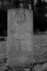 CWGC Private J Calvert The Middlesex Regiment (IanAWood) Tags: bringoutyourdead citiesofthedead graveyards harrowwealdcemetery headstonehunting lbofharrow londoncemeteries londondead nikkorafs58mmf14g nikondf stanmore uxbridgeroad walkingwithmynikon