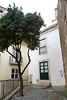 Laranjeira (photosam) Tags: lisboa portugal lisbon fujifilm xe1 fujifilmx prime raw lightroom xf18mm12r xf18mmf2r tree orange citrus courtyard