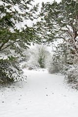 Primley Park in the Snow (v) (Ray. Hines) Tags: pentaxk5 smcpentaxda18135mmf3556edalifdcwr snow tree white primleypark paignton devon