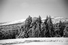 B&W FILM / Snow (jo.seppy) Tags: f100 nikon adoxsilvermax montventoux provence snow