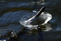 ice and sunlight (jehazet) Tags: winter ice water wind blue grey sunlight jehazet