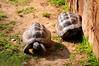 Two Turtles (Luigia80 (Pat)) Tags: tartarughe due vicine amiche piemonte murazzano parco animali turtles