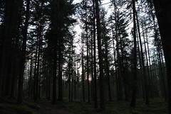 Dusk (BurnThePlans) Tags: woods forest trees nature outdoors walk scotland highlands