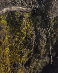 (BrianaRMH) Tags: greenthings livingthings bark botanicals elizabethlake fungus lacombe lichen moss nature texture trees walkingtrails winter