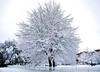 26febbraio (39)-2 (andry_92) Tags: snow tree albero arbre neve inverno winter nevearoma nevearoma2018