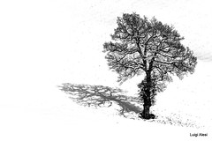 lonely tree (Luigi Alesi) Tags: sanseverino italia italy marche macerata san severino paesaggio landscape scenery inverno invernale winter neve snow albero tree bianco e nero black white bn bw nikon d7100 raw tamron sp 70300