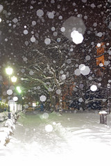 It was snowing some days ago (Matjaž Skrinar) Tags: 100v10f 250v10f
