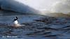Petit Garrot, 27 février 2018 ---- Bufflehead (lacostejm) Tags: petitgarrot bufflehead bucephalaalbeola zoneimportantespourlaconservationdesoiseaux refugedoiseauxmigrateurs rom zicoqc128 zico zicoquébec refuged'oiseauxmigrateurs refugedoiseauxmigrateursdelîleauxhérons fleuvestlaurent rapidesdelachine secteurdoiseauxmigrateurs lasalle migrationbirdsanctury naturequébec migratorybirdsconventionact loide1994surlaconventionconcernantlesoiseauxmigrateurs lanatureenville héritagelaurentien amisduparcdesrapides verdun bergesdustlaurent lefleuvesaintlaurentungéantfragile