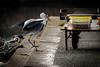 漁港の情景 #1ーScenery of fishing port #1 (kurumaebi) Tags: yamaguchi 秋穂 nikon d750 nature 自然 landscape 海 sea 夕焼け dusk 鳥 birds アオサギ