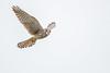 R18_1766 (ronald groenendijk) Tags: cronaldgroenendijk 2018 falcotinnunculus rgflickrrg animal bird birds birdsofprey copyrightronaldgroenendijk groenendijk kestrel nature natuur natuurfotografie netherlands outdoor ronaldgroenendijk roofvogels torenvalk vogel vogels