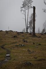 Innan snön 3 (Anders Österberg) Tags: sweden landskap landscape winter vinter fog dimma beacheslandscapes