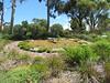 Flower Clock at Kings Park and Botanic Garden -- Perth, WA, January 14, 2018 (baseballoogie) Tags: 011418 baseball18 canonpowershotsx30is perth wa westernaustralia australia kingsparkandbotanicalgarden kingspark park