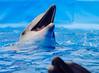 Dolphin Dance (WestMaue) Tags: blue water dolphin dance dancing dancer aquaticlife russia yeysk