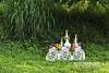 造景,戶外,庭園,公園,草,樹,居家,設計,格局,生活,現代,流行,裝置藝術 (Chen Liang Dao 陳良道 hyperphoto華藝影像網) Tags: 造景 戶外 庭園 公園 草 樹 居家 設計 格局 生活 現代 流行 新潮 時尚 摩登 品味 風格 格調 光線 擺設 柔和 明亮 鮮明 溫暖 甜蜜 幸福 快樂 親切 活力 溫馨 浪漫 舒適 寧靜 悠閒 清新 幽靜 舒服 夢幻 安靜 自然 景觀 關注 探索 領域 圖形 圖像 圖案 生活情趣 元素 娛樂 環境 創意 概念 裝置藝術