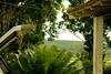 A relva no quotidiano (Luis Soquetti) Tags: natural natureza cidade urbano paisagem urbana artifício alterado paisagemurbana cena cenário árvore vegetal vegetação vida verde folha crescer fotossíntese ambiental meio ambiente